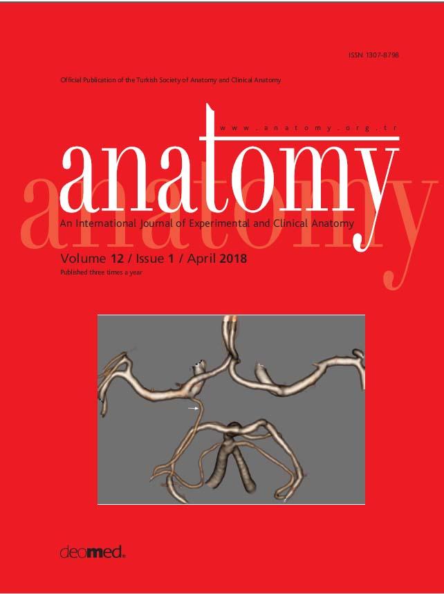 Anatomy [International Journal of Experimental and Clinical Anatomy ...